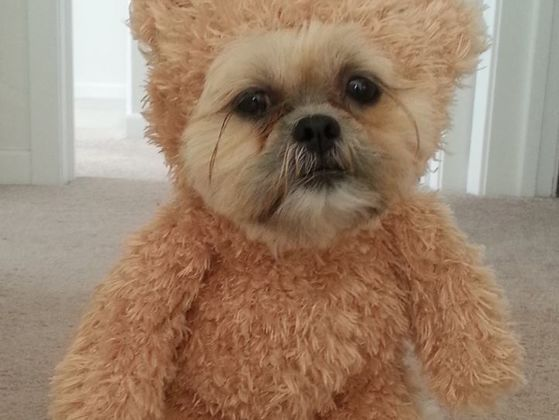 9 Dogs That Are More Talented Than You'll Ever Be