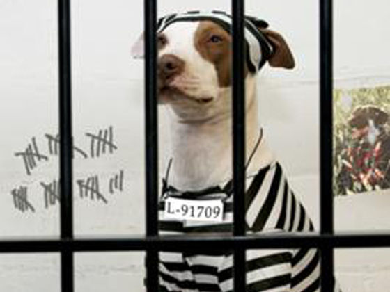 Dog Discrimination- Are you guilty?