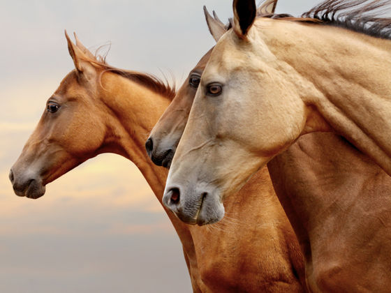 How Much Do You REALLY Know About Horses?