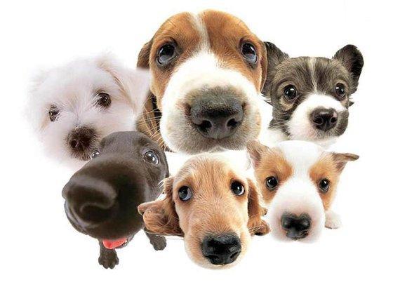 Name The Popular Dog Breeds