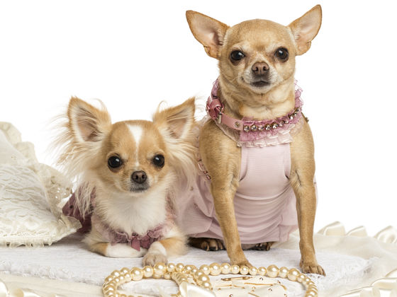 Which Pop Star Pet Are You?