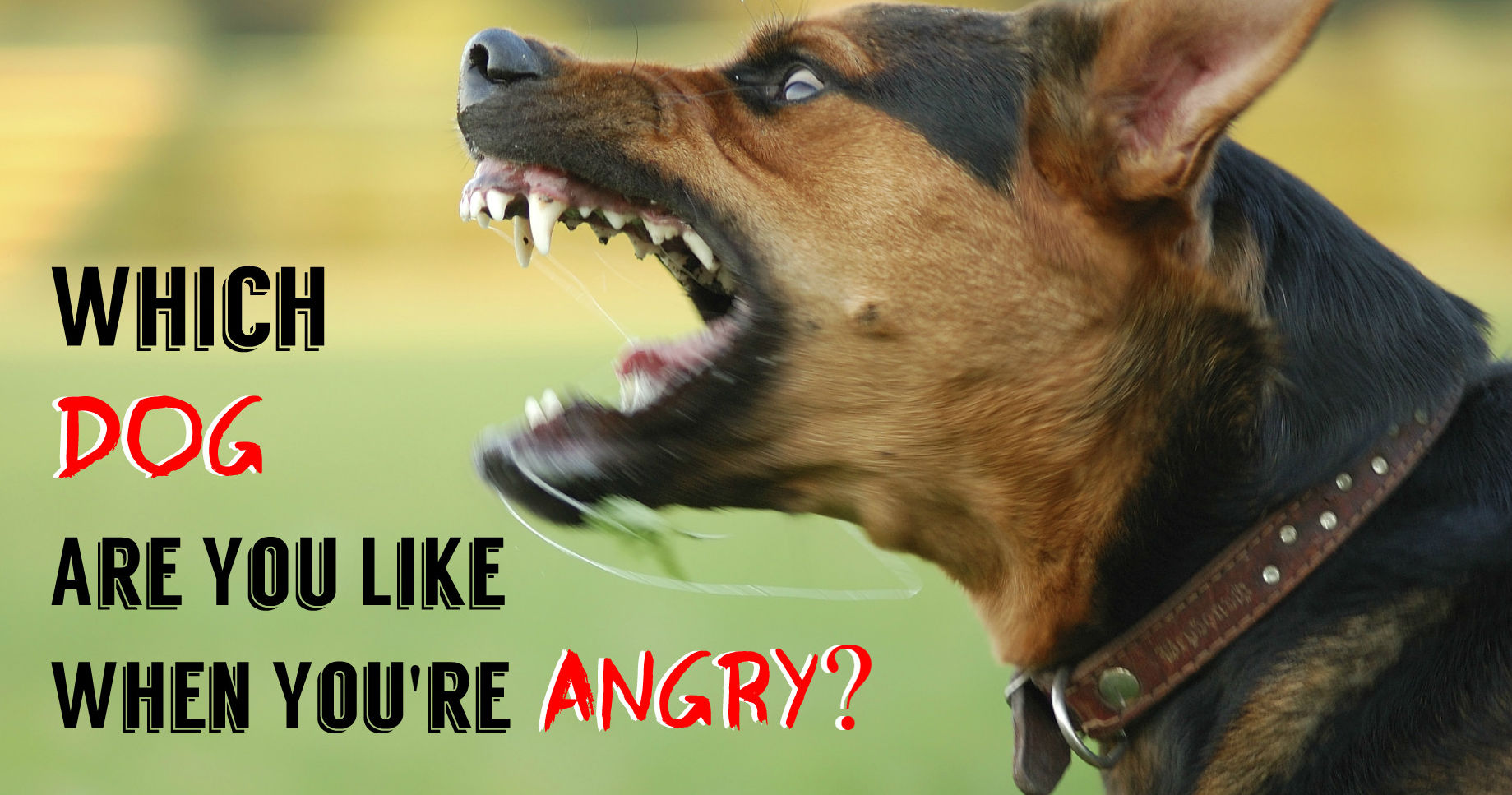 Which angry dog are you