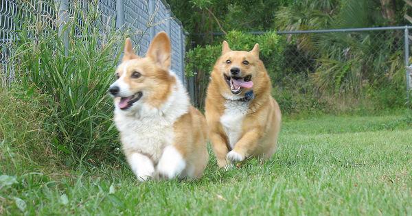 dogs and neighbors