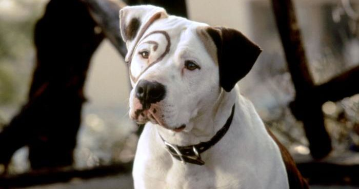 famous movie dogs