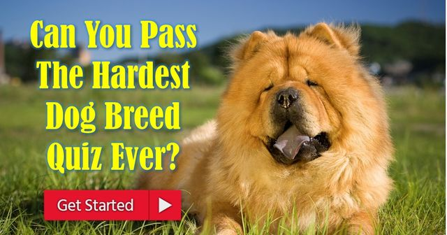 hardest breed quiz ever