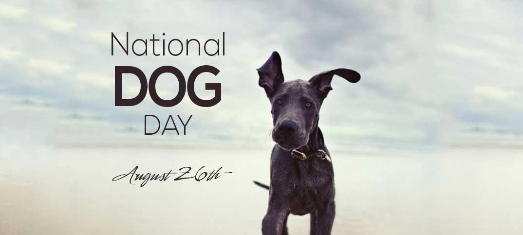 PupLife - National Dog Day