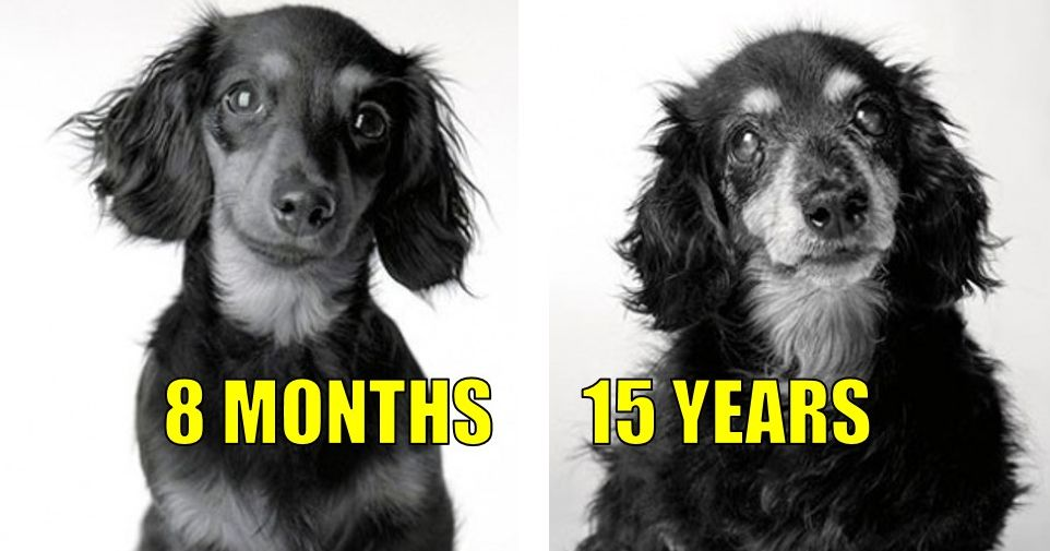 puppies getting old