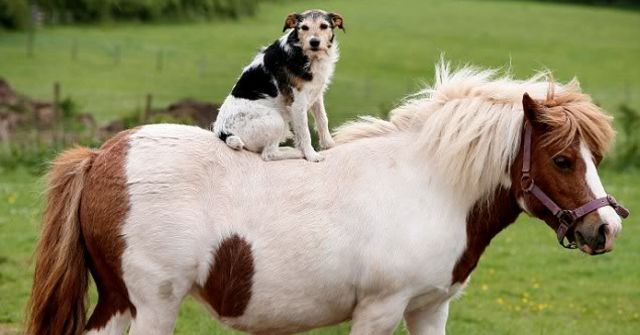 puppies on ponies