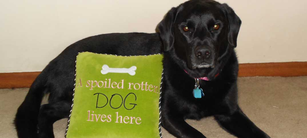 Quizzes - How Spoiled Is Your Dog