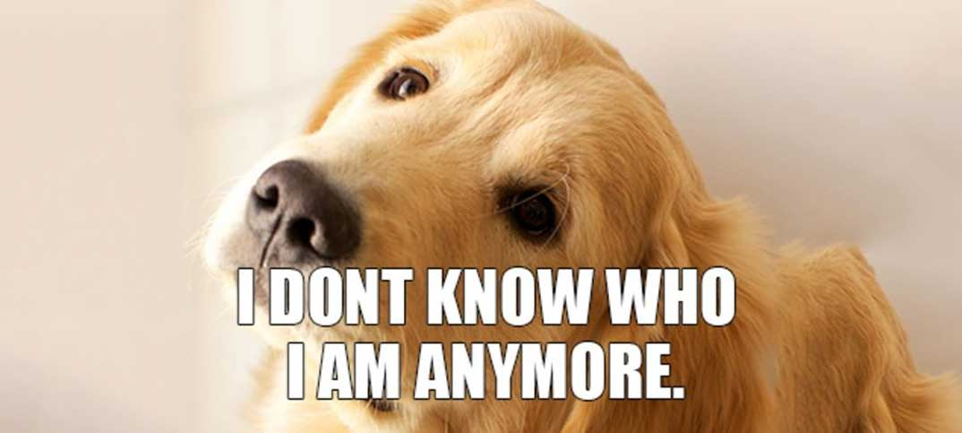 Quizzes - Which Internet Superstar Dog Am I