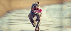 Loves to run