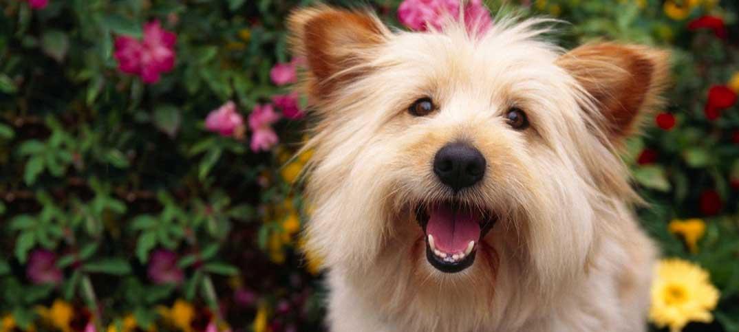 Quizzes - Terrier Soul Mate