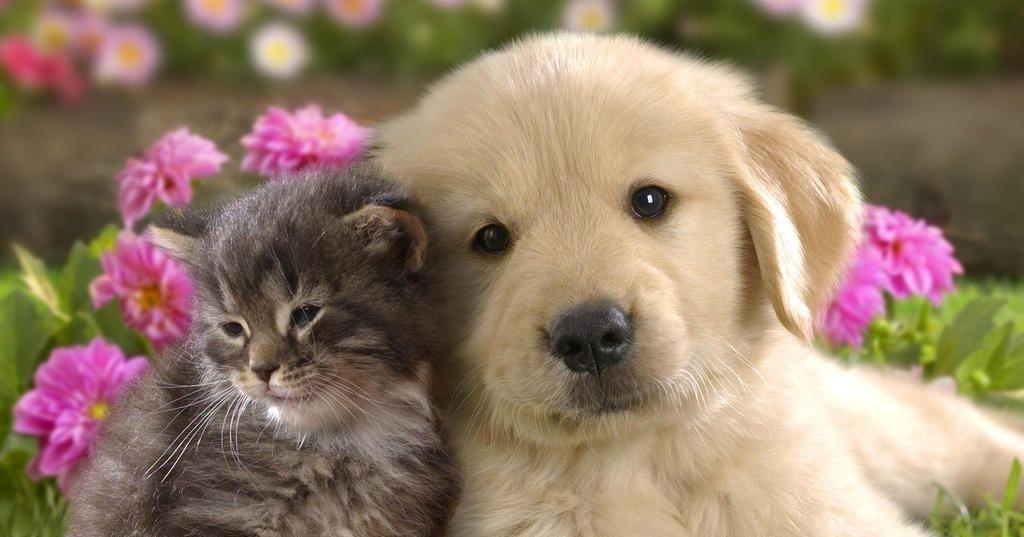 team cat or dog