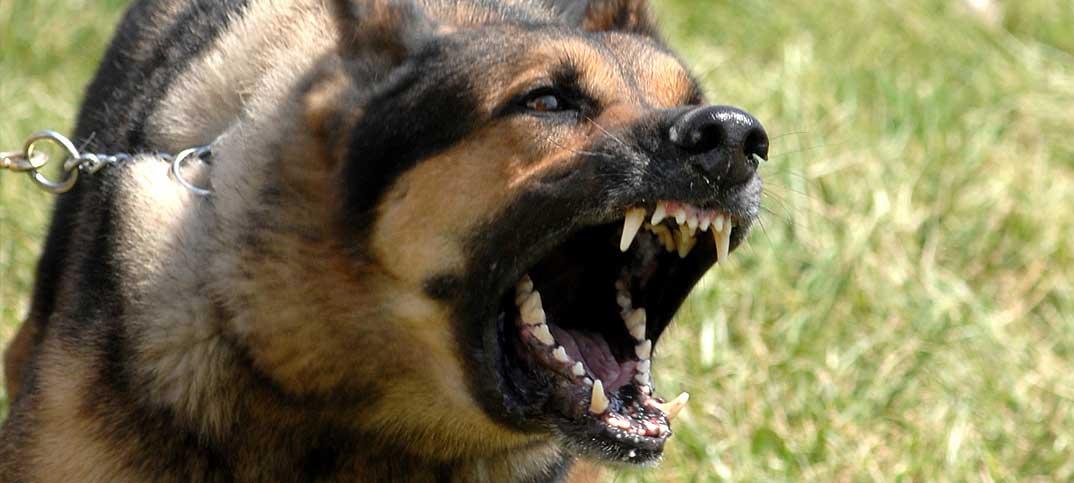 Training - Dog Aggression