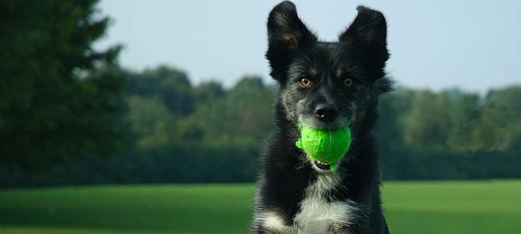 Dog Training - Dog Training 101