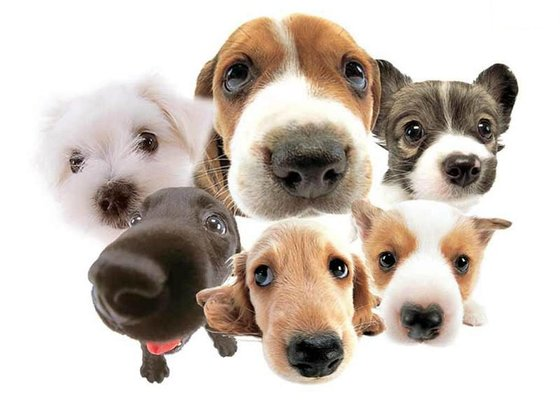 what is top dog breed
