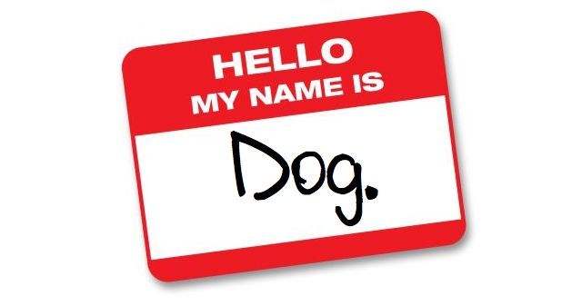 what should you name your dog