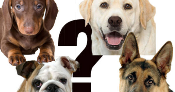 which dog breed
